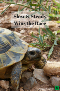 The tortoise and the Hare- read this story to motivate your band students! Teach your band students to set goals and strategically practice to reach them. Hard work and patience will bring success and mastery on a any instrument. This is a great read for band directors, choir teachers, music teachers and orchestra directors.
